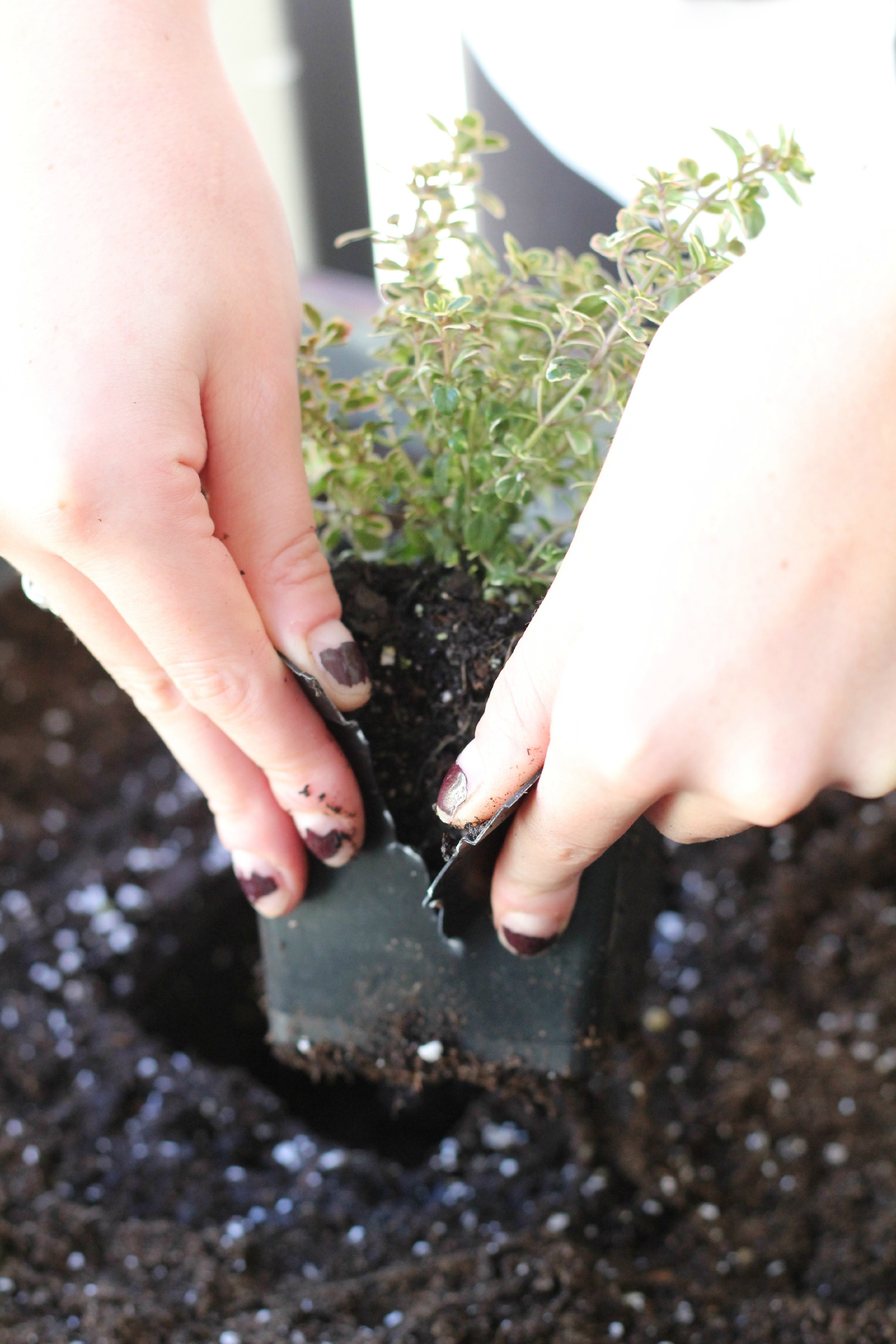Want to know how to start an herb garden? It is so easy that it can be done on your balcony!